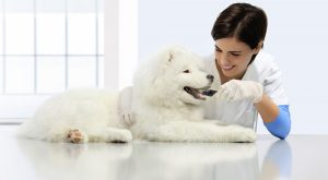 What are the differences between CR and DR in veterinary dental radiography?