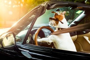 Mobile Veterinary Care: What You Need to Know Before Starting Your Own Practice on Wheels