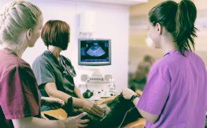 Career Spotlight: Veterinary Diagnostic Imaging Specialist