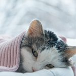 Did you know that 96.7% of cats and 83.6% of dogs suffer from hypothermia?