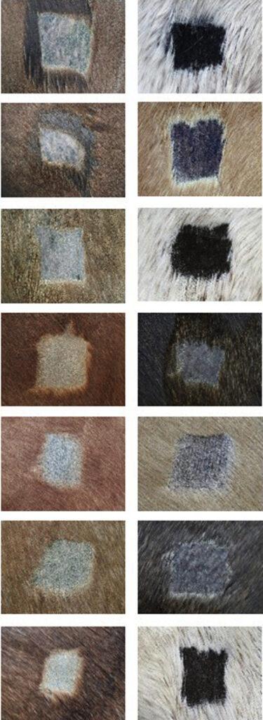 Multi Radiance ActiVet PRO Equine skin